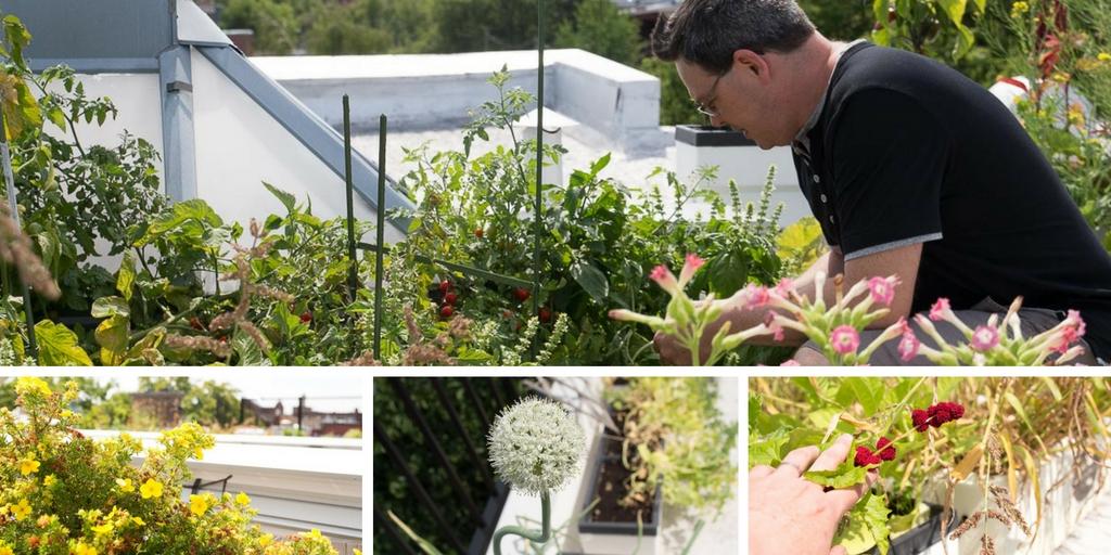 un jardin urbain au coeur de petite patrie tranches de pimou s. Black Bedroom Furniture Sets. Home Design Ideas